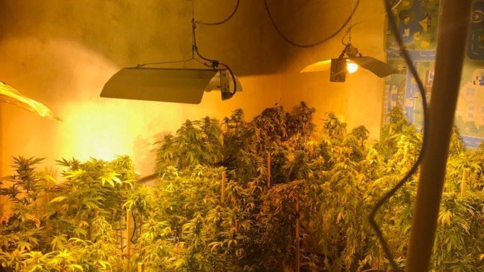 נתגלתה דירה בקריית ביאליק ששימשה לגידול סמים