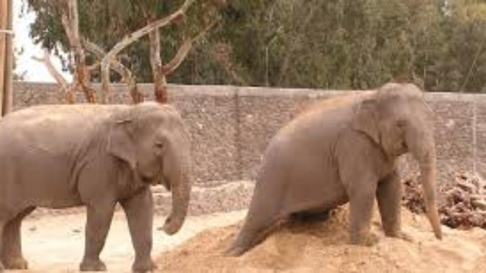 חי-פארק קרית מוצקין הגן החיות יפה בישראל