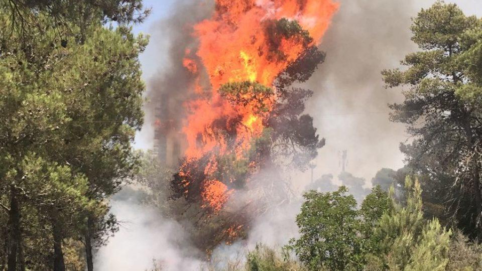 שריפה ביער הכרמל