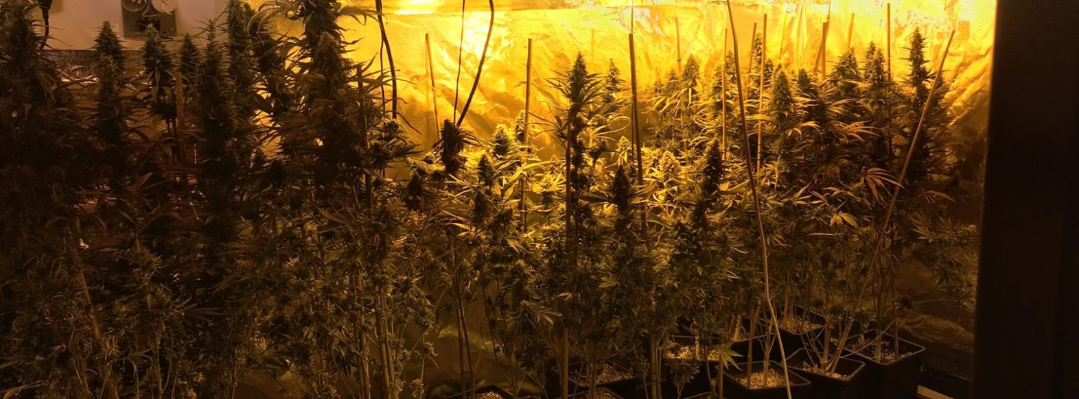 שוטרי מוצקין פיצחו מעבדת סמים גדולה בדירה בעיר.