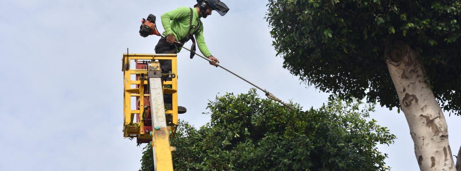 מבצע גיזום וטיפול בעצים ברחבי קרית אתא