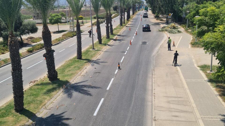מבצע גיזום וטיפול בעצי דקל ברחוב זבולון