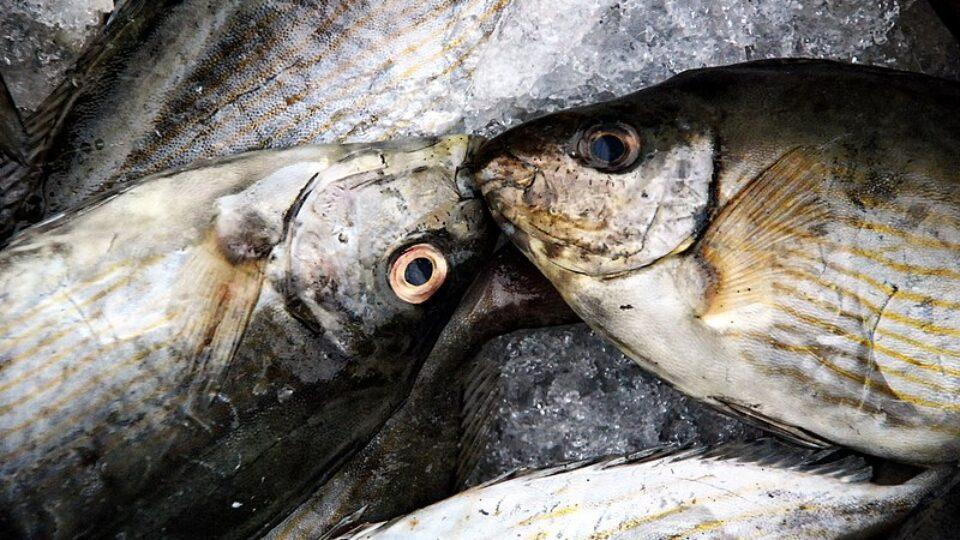 """השמדת דגים בחנות """"דגי אברהם"""", ברחוב ויצמן 1, קריית-ים"""