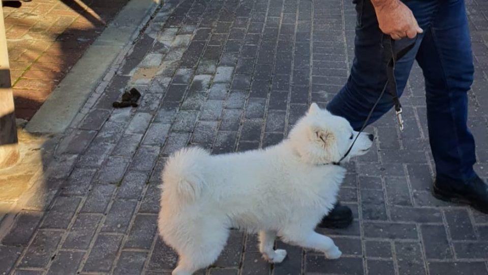 קריית אתא-מבצע אכיפת כלבים משוטטים ואי איסוף צרכים בעיר
