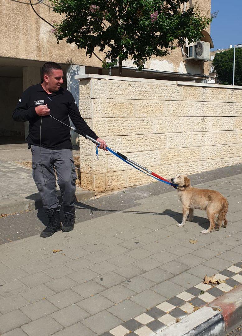 מבצע אכיפה כלבים