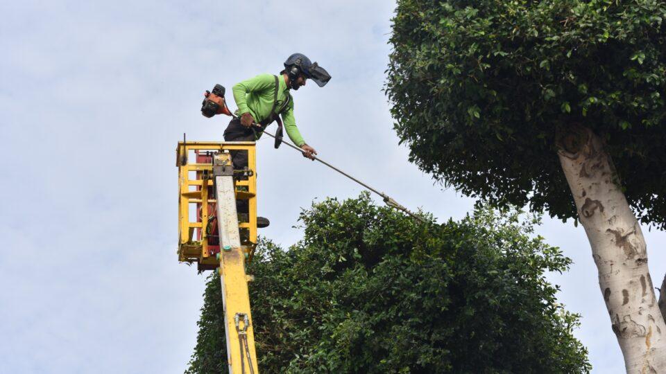 מבצע גיזום וטיפול בעצים ברחבי קריית אתא