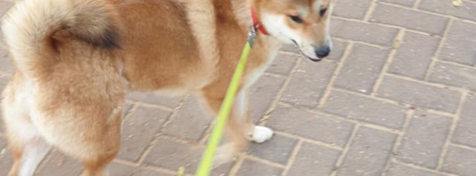סוף לצואת הכלבים ברחובות ובפארקים בקריית מוצקין