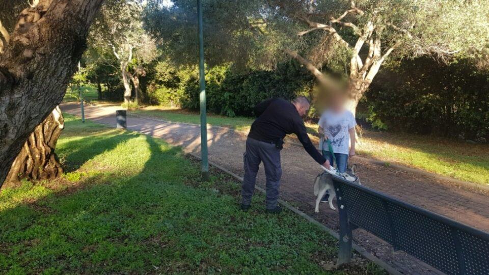 מבצע אכיפת כלבים משוטטים, רישיונות בתוקף ואי איסוף צרכים
