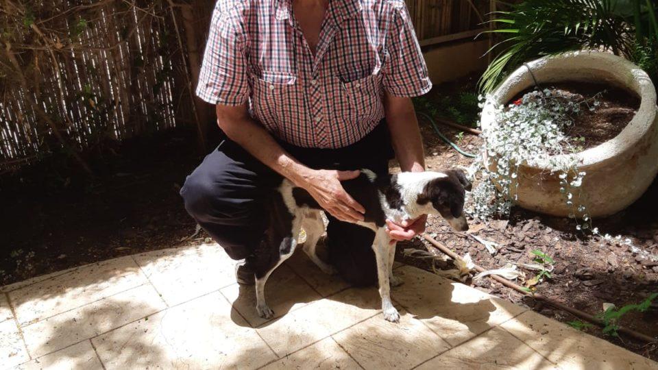 כלב בן ב-18 עיור וחירש הושב לבעליו לאחר לילה מורט עצבים בו נעלם.
