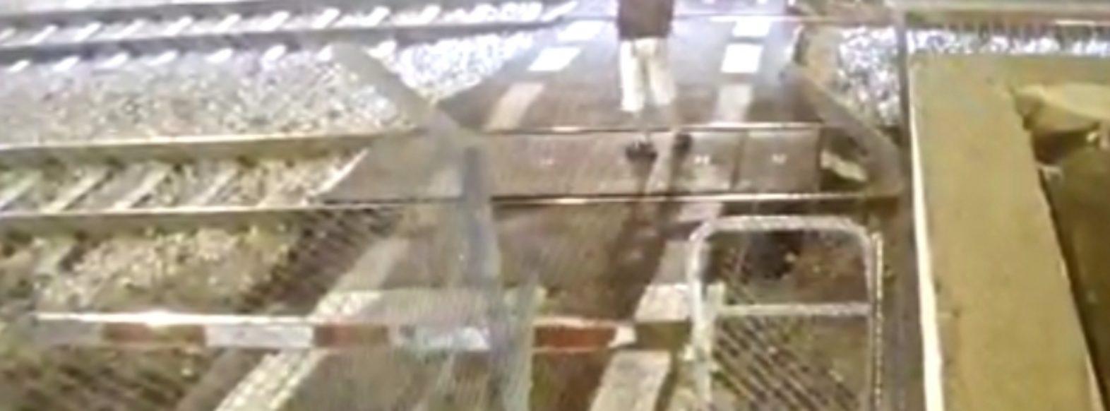 קריית שמואל: נתפס מתועד מיידה אבנים על רכבת ומסכן את הולכי הרגל