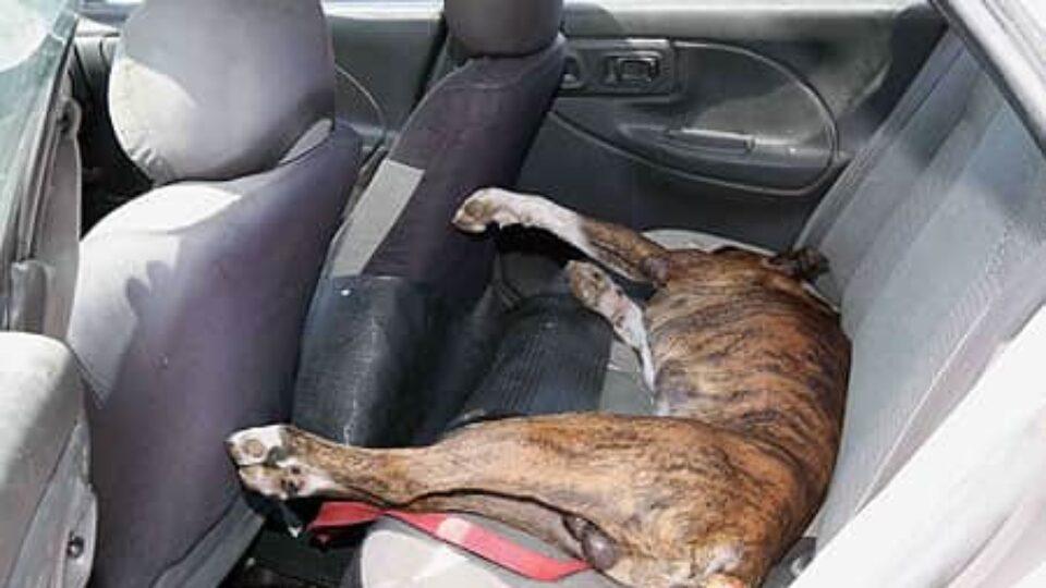 """כלב נותר סגור ברכב במשך 45 דקות וניצל ממוות ע""""י עובר אורח"""