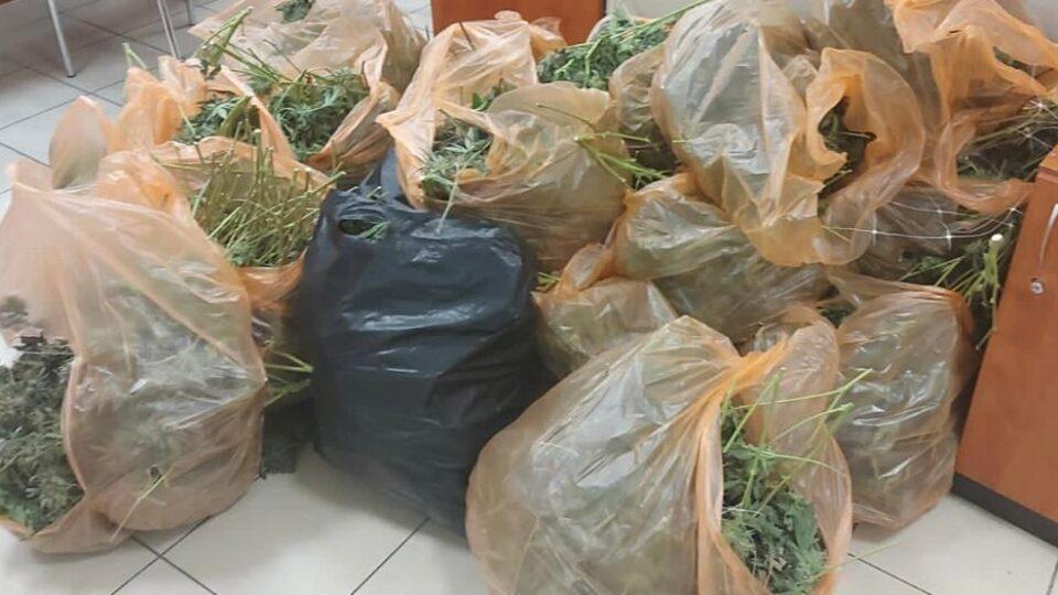 40 קילוגרם של קנביס נתפסו בדירה בחיפה